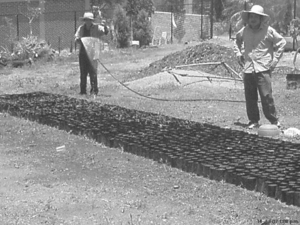Quiénes somos - Historia Vivero Magnoliophyta