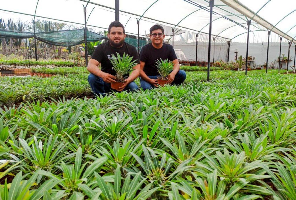 Propagación de la Palma de Madagascar - Pachypodium Cuidados Curso Online Vivero Magnoliophyta