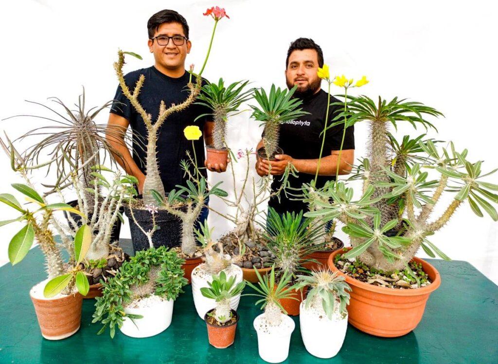 Especies de Pachypodium - Vivero Magnoliophyta