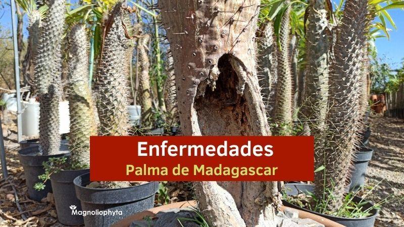 Enfermedades de Palma de Madag